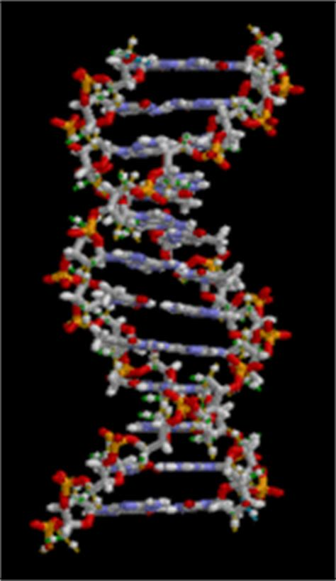 Dna polymerase 1 2 3 | offer high quality sequencing reagent for next