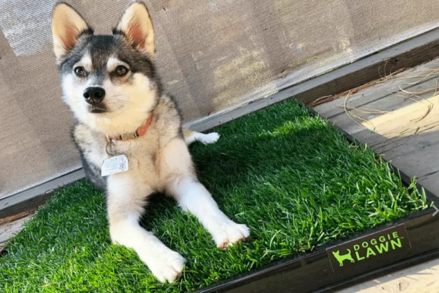 dog on the grass