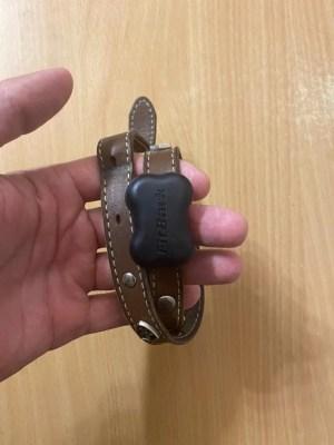 FitBark GPS on a dog collar