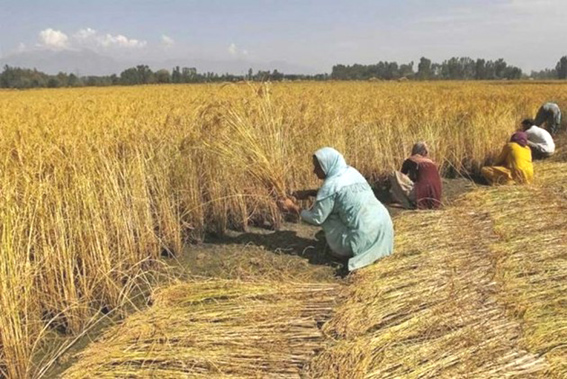 Budget 2019: Govt may hike agri credit target to Rs 12 lakh cr