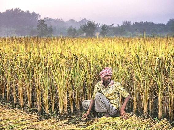 Fewer Kisan Credit Card borrowers as banks grapple with NPAs in farm sector