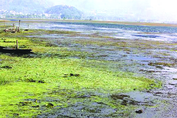 Despite spending crores of rupees, Dal Lake showing no improvement