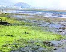 Dal Lake becomes garbage dumping site