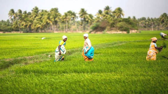 'Budget should focus on promoting food processing to boost farmer's income'