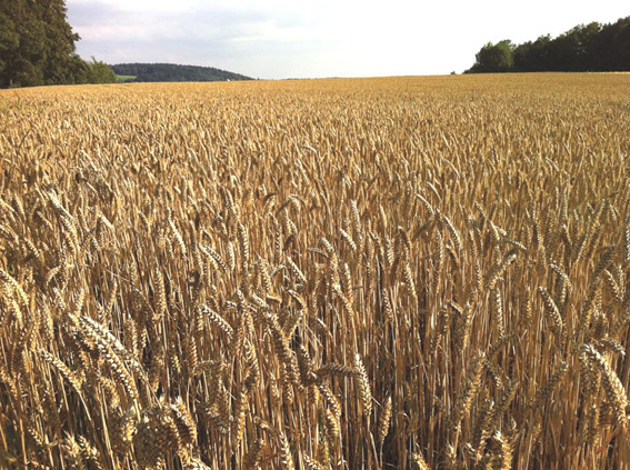 Centre cannot buy wheat beyond 67.25 lac tonne from MP: Paswan
