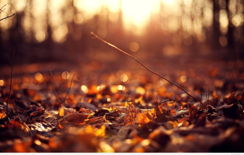 image of autumn leaves weather change