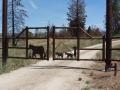 drive gate - bears