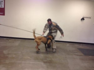 Protection dog training Austin tx