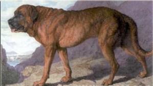 alp mastiff training