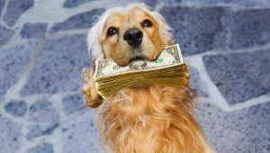 dog-training-austin