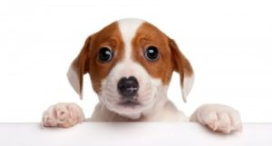 Upholstery Pet Odor Decontamination