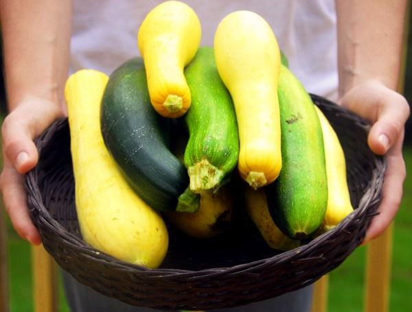 Basket of garden fresh squash and zucchini