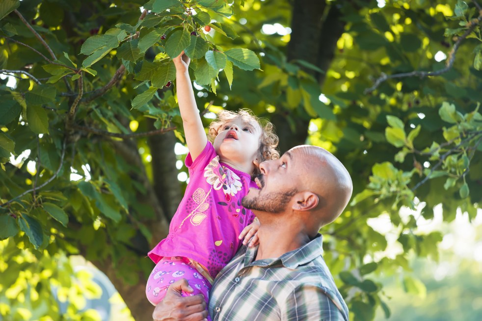 Parent and child picking fresh fruits from a tree