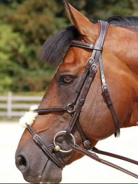 Dyon Trense Working Collection Bridle Mexican noseband