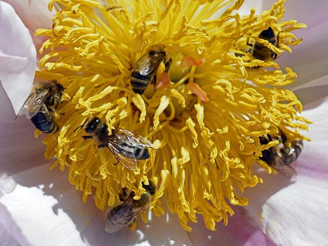 six-bees