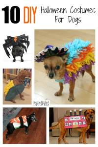 Dog Costumes Diy
