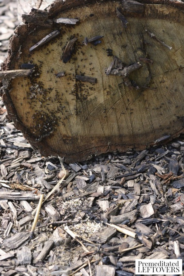 Exploring Under Logs Nature Activity for Kids