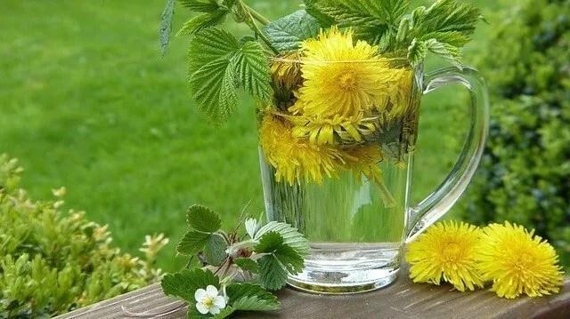 Wine Making For Optimists – Making Dandelion Wine