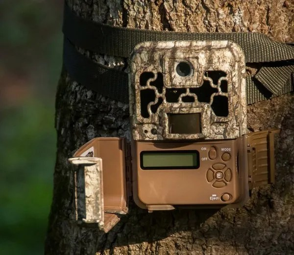 Trail Cameras: What You Must Know Before You Buy