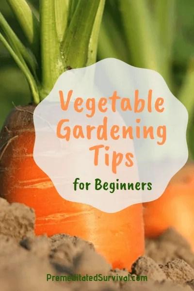 vegetable gardening tips for beginners
