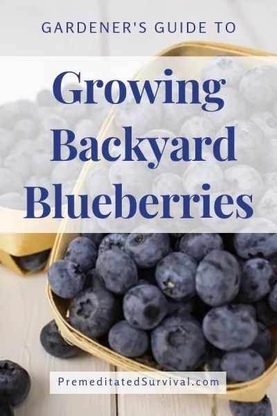 growing backyard blueberries