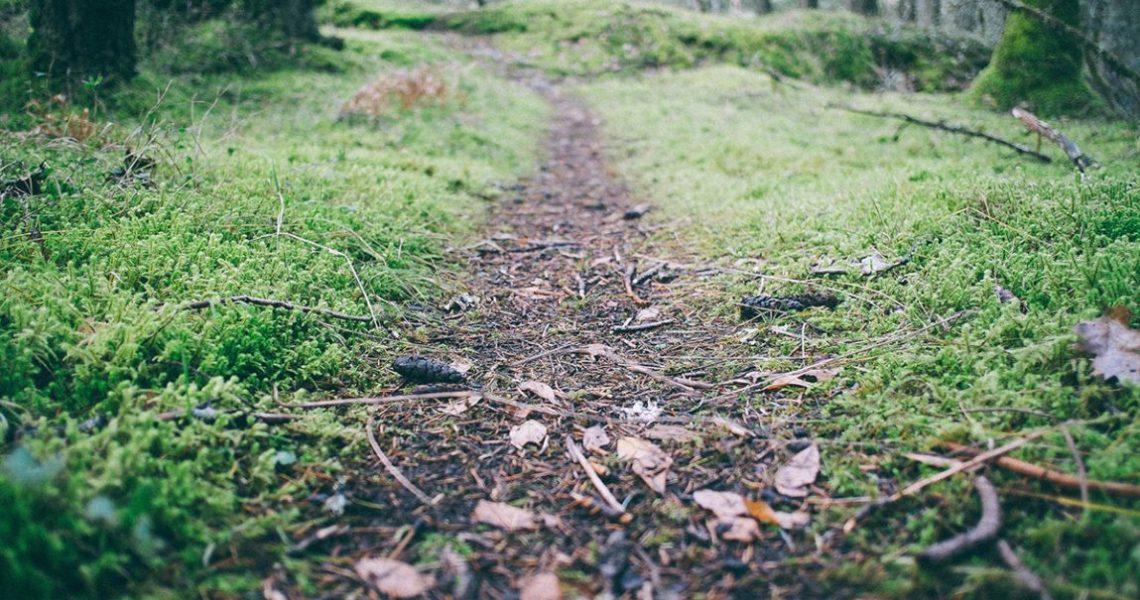 Chemin forêt course à pied