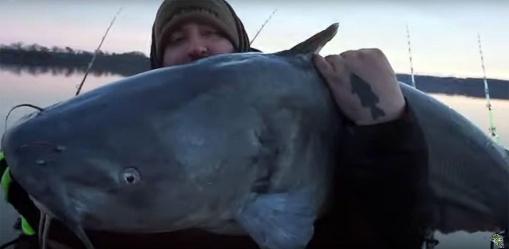 James River Blue Catfish 5050 Fishing