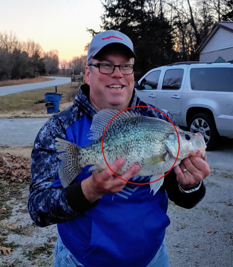How to Identify a White Crappie