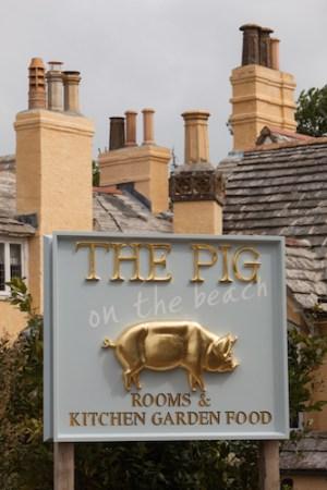 Pig on the Beach, Studland Bay, Dorset