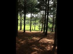 Twisted Tine Trails 6
