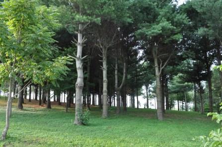 Twisted Tine Trees 2
