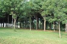 Twisted Tine Trees 5