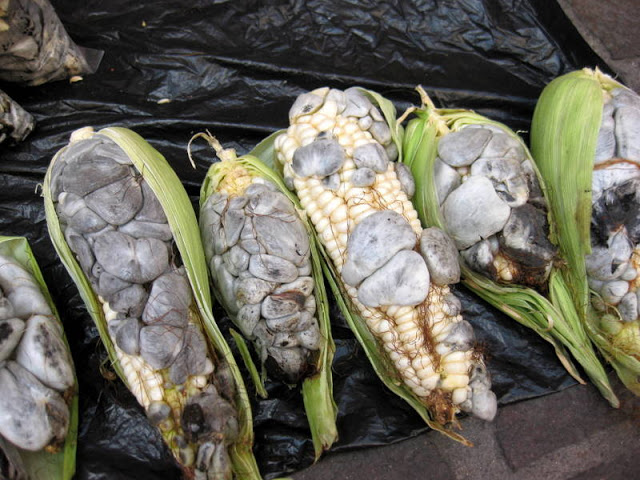 huitlacoche - 10 Weirdest Foods to Eat Before You Die
