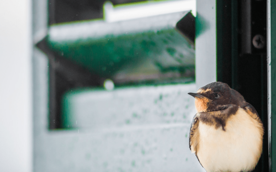 How To Prevent Bird-Window Collisions In Your Property