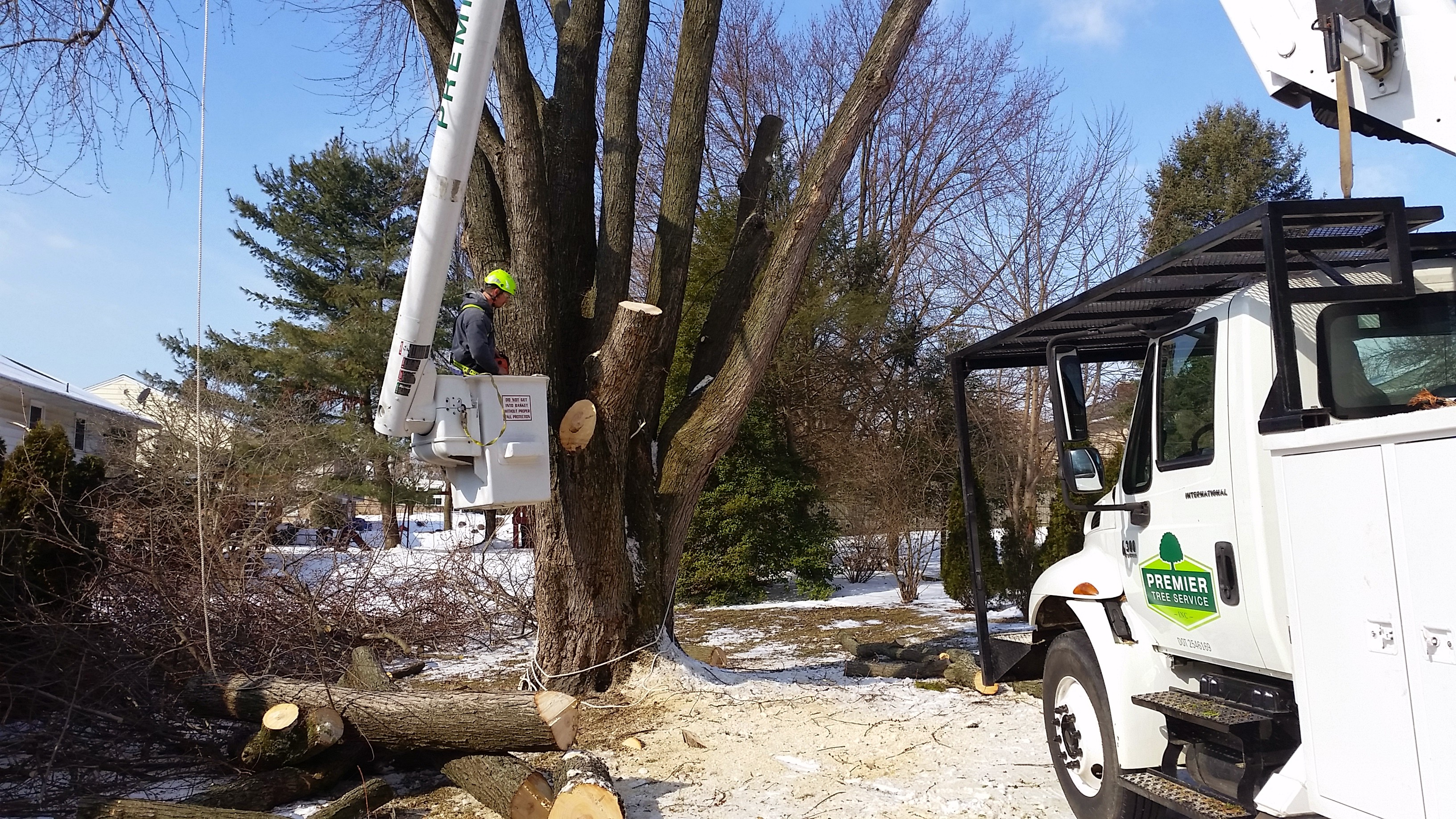 Lowering heavy limbs slowly with rope to save the yard
