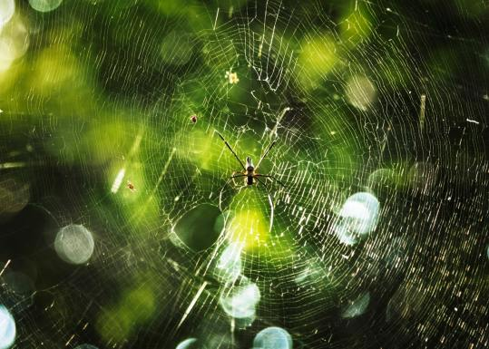 Insect Sting - spider on web