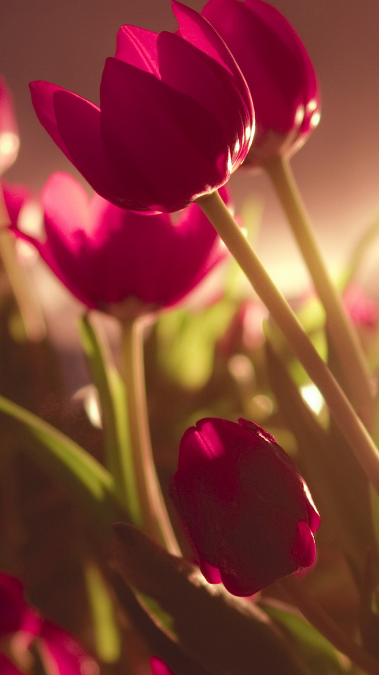 free spring iphone wallpapers premiumcoding
