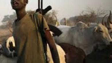 Herdsmen invade Southern Kaduna, kill nine in fresh attack