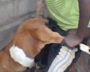 Teenage boy caught having sex with goat