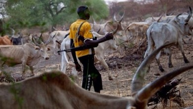 Three farmers reportedly killed in Ondo forest by herdsmen