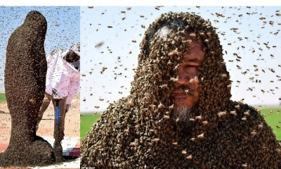 Man tries to cover himself with 20,000 bees in his second attempt to make it into the Guinness Book of Records
