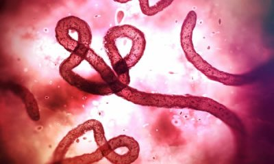 Russian health care ministry creates new powder vaccine against Ebola