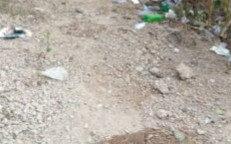 Man found dead in Ibadan with his head cut off
