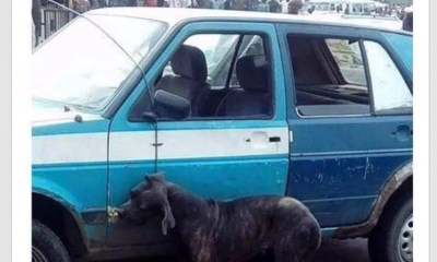 Dog beaten to death in Port Harcourt following claims it transformed from a man