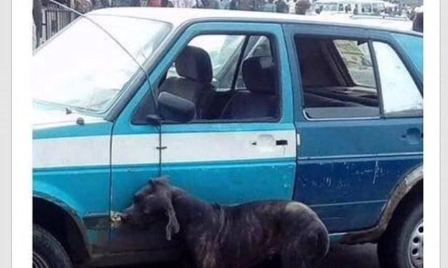 Dog beaten to death in Port Harcourt following claims it transformed from a man (photos)