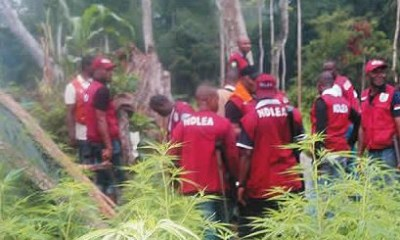 NDLEA destroys 40 hectares hemp in Ibadan