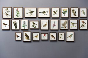 paintings of the birds on the wall