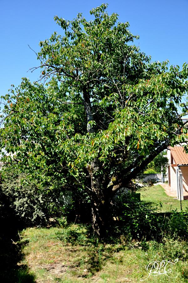 Prendre le temps - Nouvelle maison - Cerisier