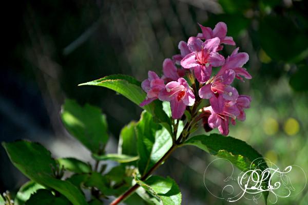 Prendre le temps - Nouvelle maison - fleurs