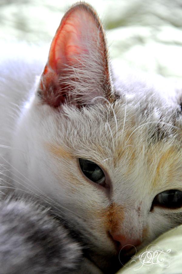 Prendre le temps - Blogueuse à chats - chat Matcha